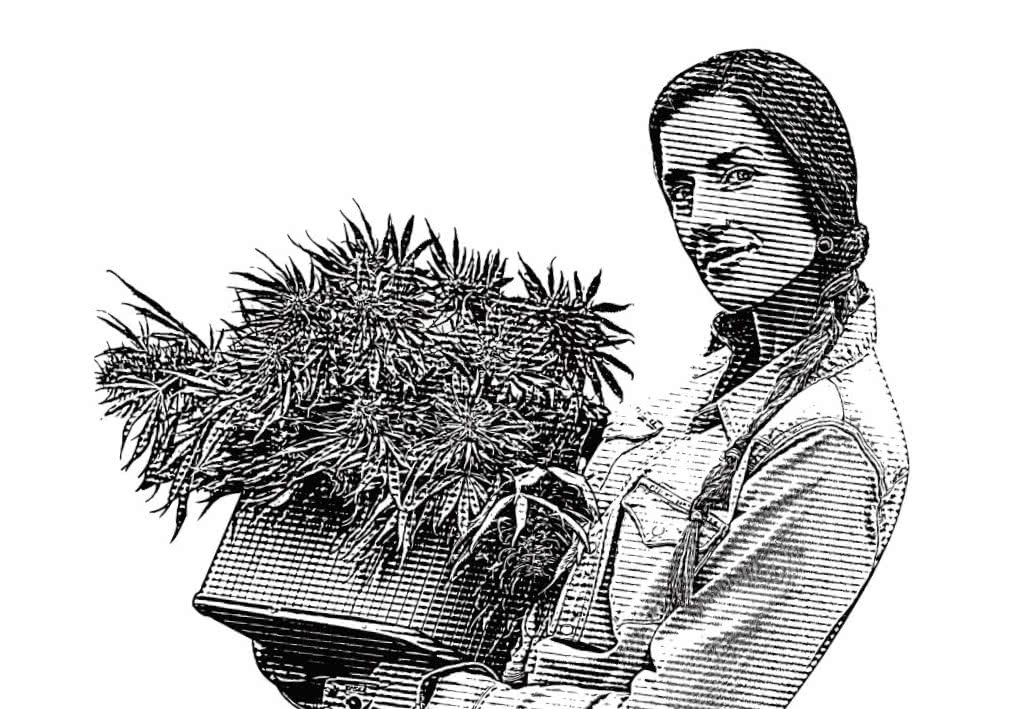 grassfarmer.com grow marijuana resource image